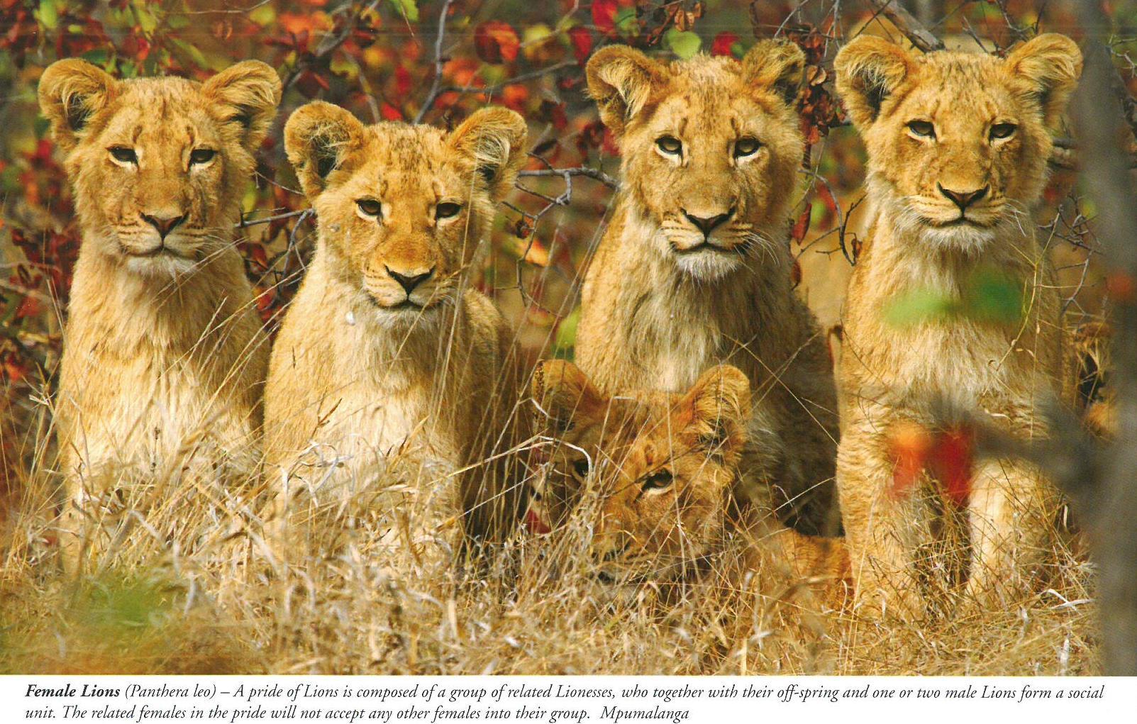 lady smith black mambazo leon sleep