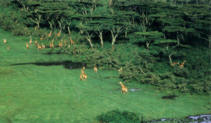 home east africa safaris