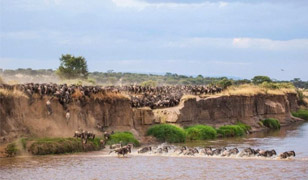 home great migration of the serengeti safaris