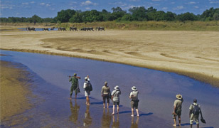 home zambia safaris