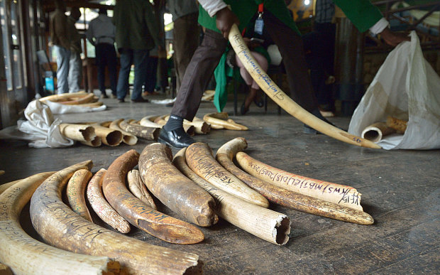 A hoard of illegal ivory